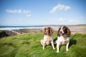 Millin Brook Luxury Dog Boarding Pembrokeshire